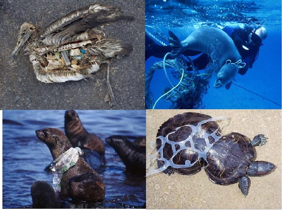 plastic pollution trash animals vegan zero waste ocean