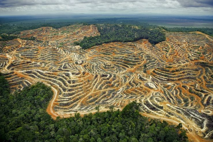 Palm oil not sustainable