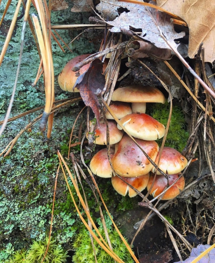Mushrooms sustainable mycelium