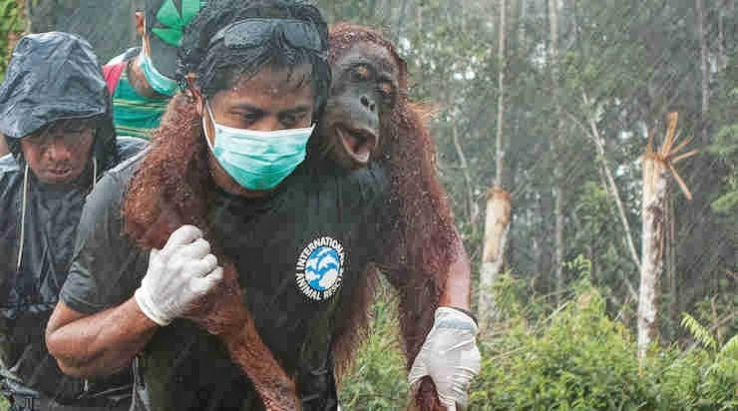 sustainable palm oil is a lie