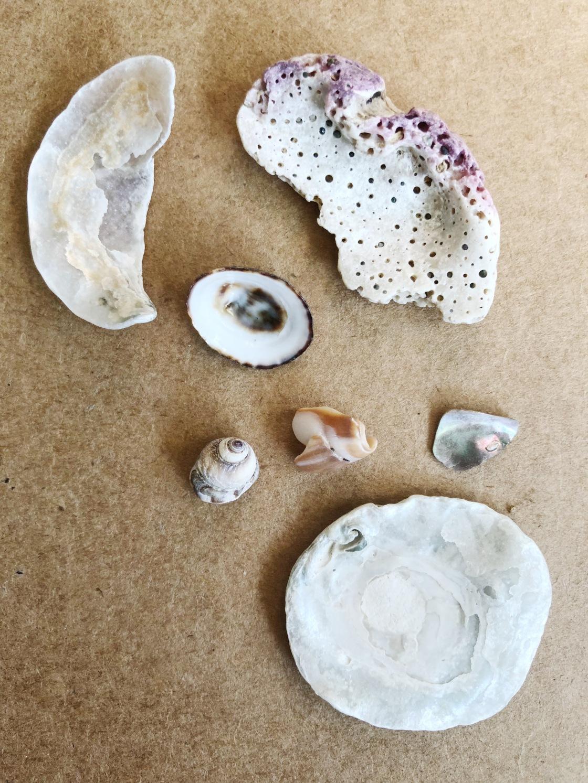 Shells treasures beach