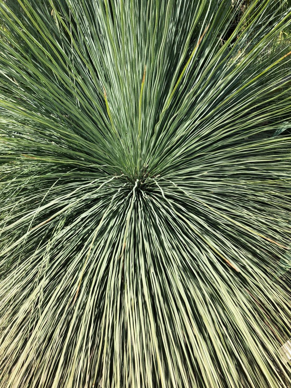 plant berkeley