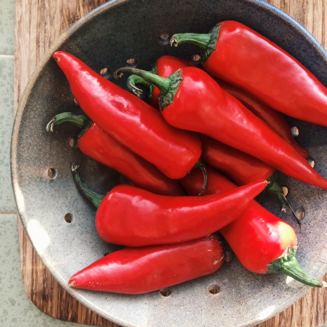 chiles hot peppers