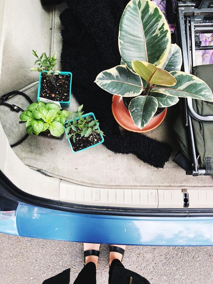 Plants garden