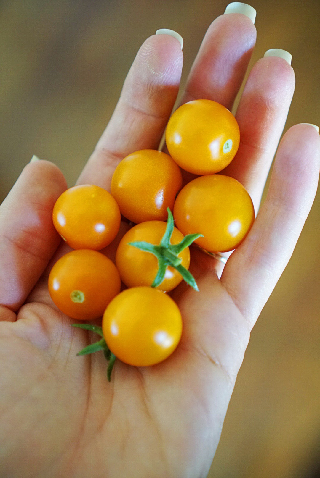 sun gold cherry tomato