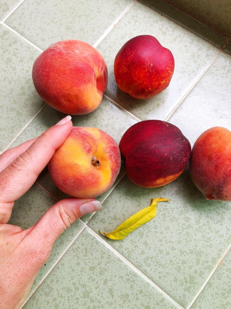 peaches nectarine summer